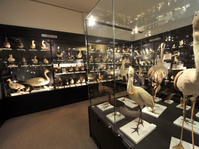 MUSEE ORNITHOLOGIQUE CHARLES PAYRAUDEAU