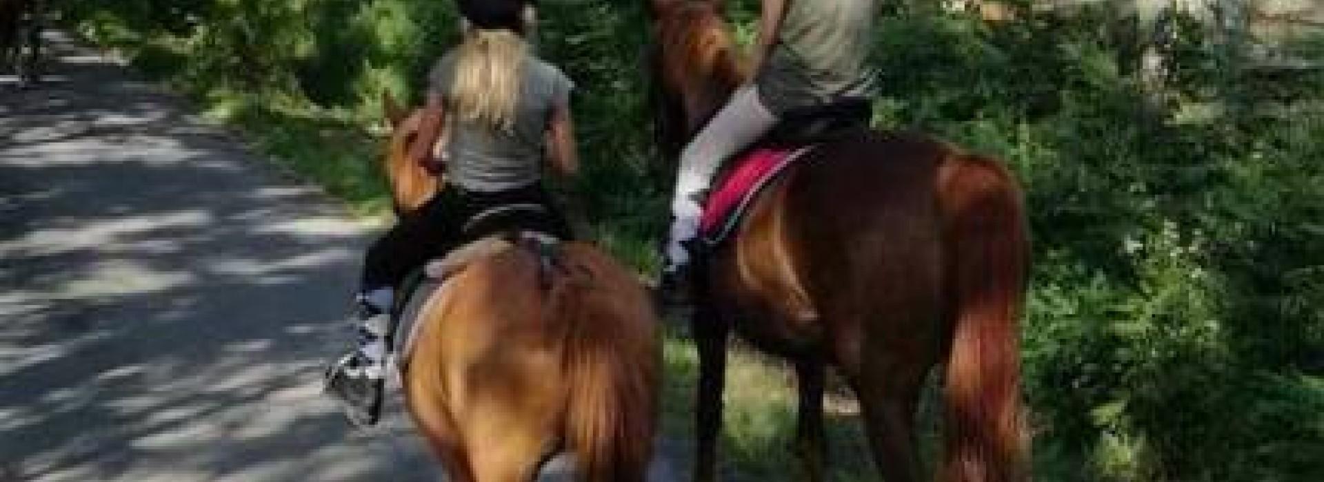 poney yzernay