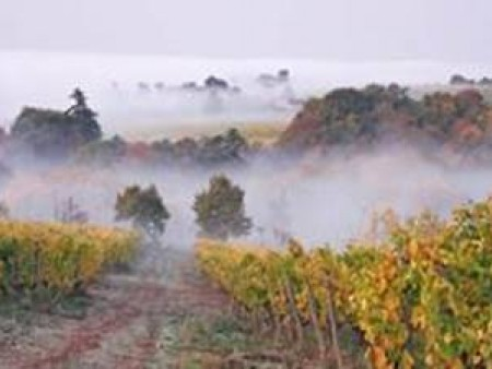 LE SECRET DES VENDANGES