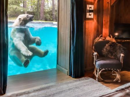 safari lodge zoo de la fleche h bergements insolites en pays de la loire. Black Bedroom Furniture Sets. Home Design Ideas